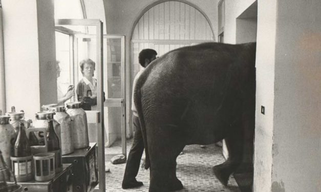 Un elefante in una camera d'ospedale!!!!!