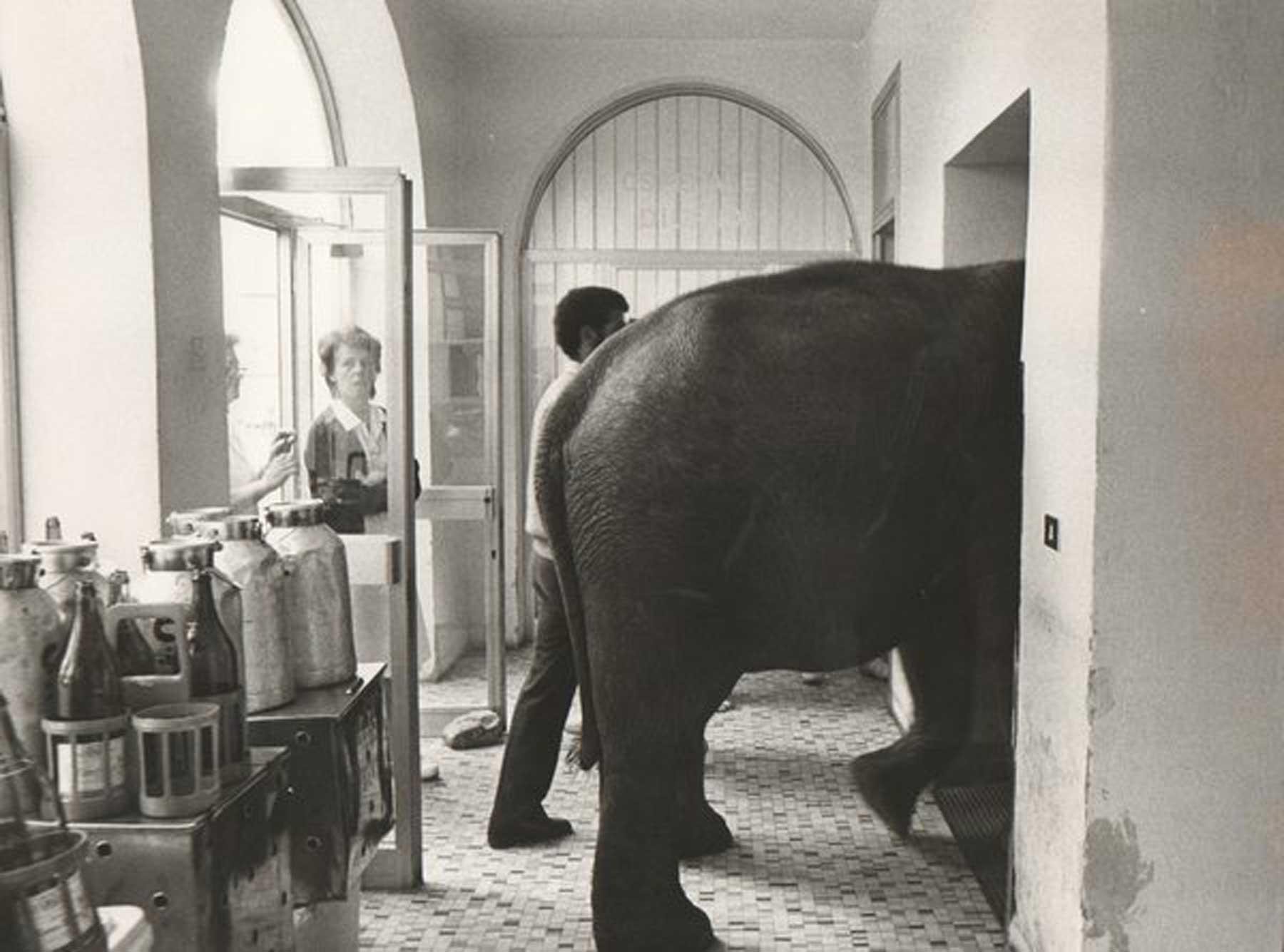 20_elefante_in_camera[1]